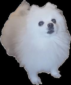 gabethedog freetoedit