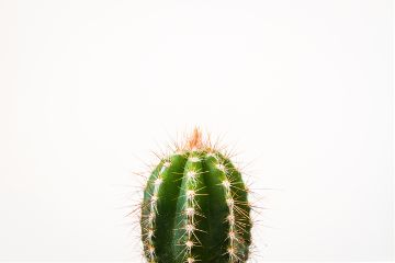 freetoedit cactus objects nature flower