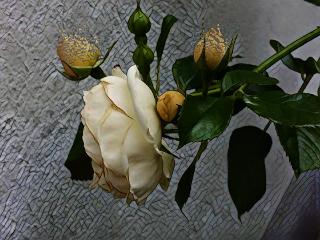roses naturelovers pautzispics pautzisedits dispersion