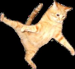 cat flying flyingcat orangecat orange