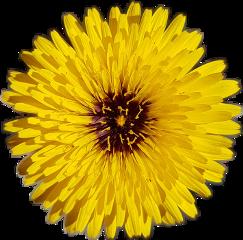 flower flowersticker freetoedit