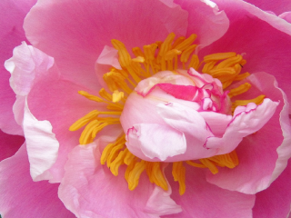 flower upclose freetoedit