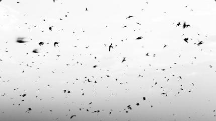 ftestickers birds