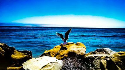 freetoedit fathersday atthebeach ocean bird
