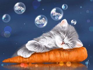 art cat cute baby photography