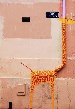 freetoedit urban building giraffe street