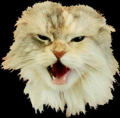 freetoedit cat maine