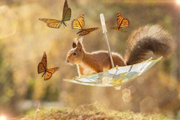 freetoedit squirrel orange buterfly buterflies