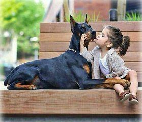 freetoedit baby kiss dog doberman