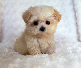 freetoedit dog baby
