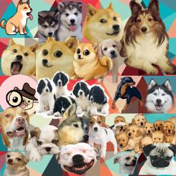lovely puppiesatheart awww freetoedit