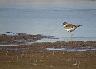 freetoedit nature photography wildlife bird
