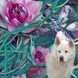 freetoedit collage pondflowers searose dog