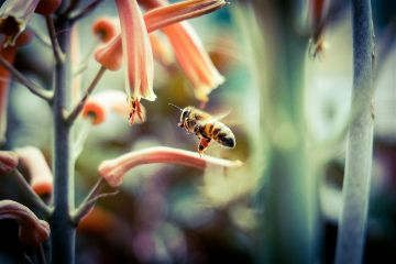 bee bug animal nature colombia