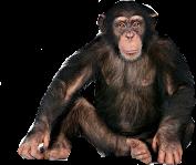 maymun freetoedit