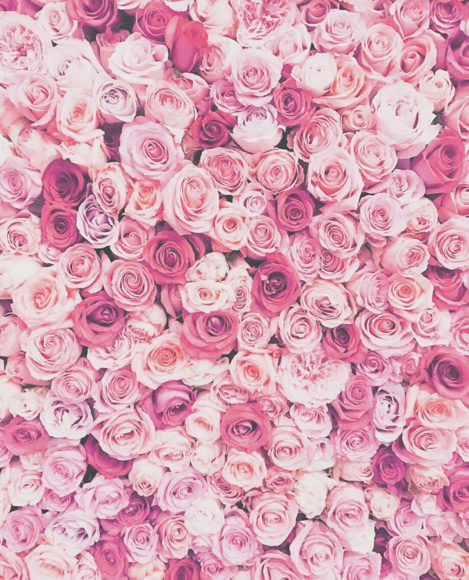 Tumblr Roses Flower Pink Hue Wallpaper Background Adjus