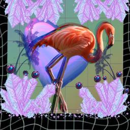 freetoedit flamingo aesthetic