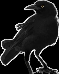 bird death crows freetoedit