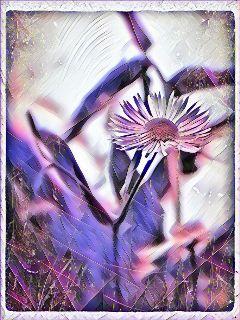 freetoedit goodnight flower photography spring