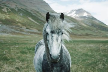 freetoedit horse animal nature green