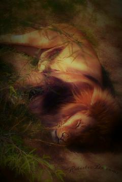 lion petsandanimals cat zoo