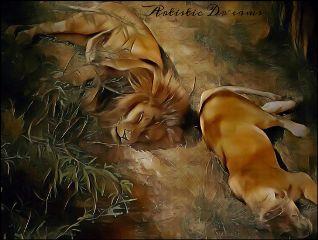 lion lioness petsandanimals cat zoo