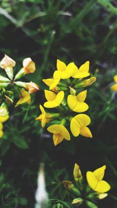freetoedit photography nature naturelover flower