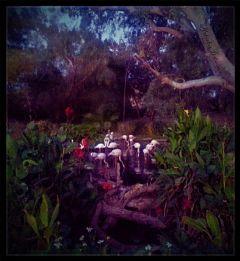 dpcpink pinkflamingos birds petsandanimals zoo