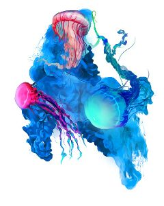 underwater jellyfishes colorful colorsmoke animals