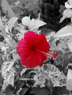 photography travel nature flower emotions
