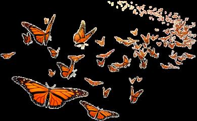 butterflies butterfly freetoedit