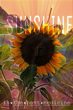 sunshine freetoedit sunflower summervibes