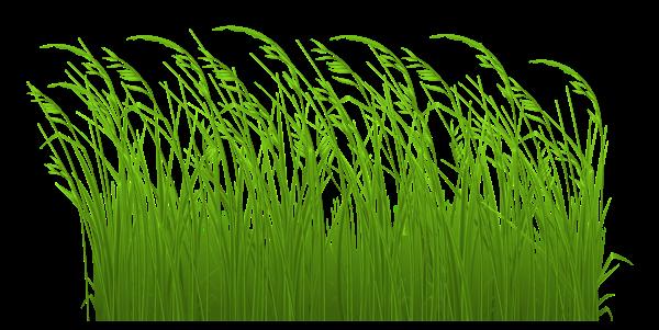 #grass #freetoedit