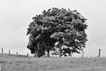 blackandwhite tree nikond5300