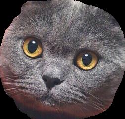 няшка-котяшка freetoedit