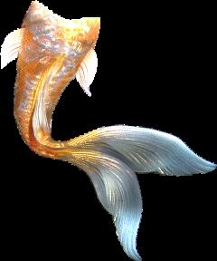 mermaidtail mermaid ftestickers freetoedit
