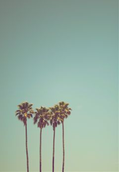 freetoedit palm tropic beach summer