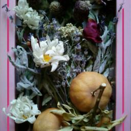 herbs dryfruits herbarium freetoedit
