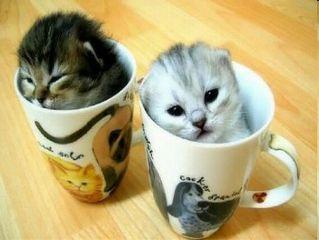 freetoedit cute cat