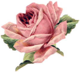 roses flower garden plants freetoedit