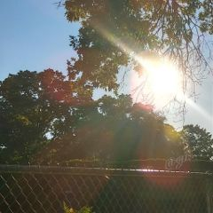 freetoedit rays morning thursday