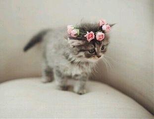 freetoedit kitten cat pets cute