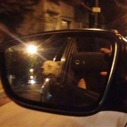 dpcpetwalking funnyride dogo roadtripping fun