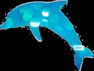 dolphin ocean beach blue freetoedit
