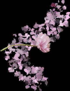 overlay pink flower freetoedit