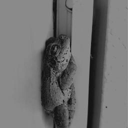 frog frogger bnw freetoedit