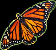 buterfly freetoedit