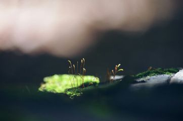 macro minimal nature
