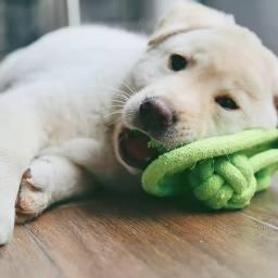 DogsOfPicsArt GuiltyPets PuppyLove