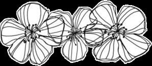 doodleflower flower doodles ftestickers freetoedit ftedoodleflowers